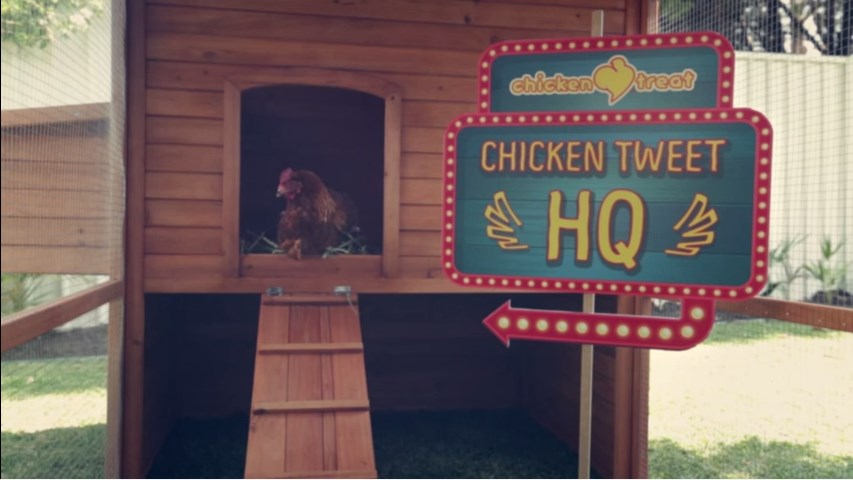 твиттер курицы 1
