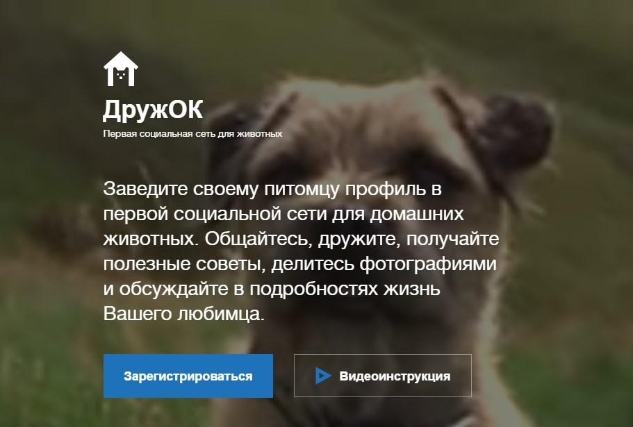 Соц сеть для животных ДружОК: новое на сайте Одноклассники