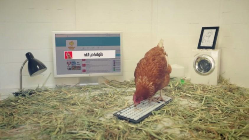 твиттер курицы