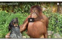 Лучшие рекламные ролики 2015